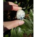 Agate Mousse Polie 20 Gr