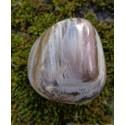 Bois Fossilisé Poli 96 Gr