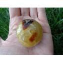 Septaria Polie 73 Gr