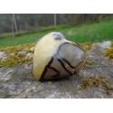 Septaria Polie 78 Gr - Coeur