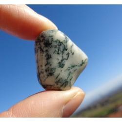 Agate Dendritique (Merlinite) Polie 12 Gr